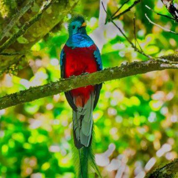 The Bird God: Ian Dickinson